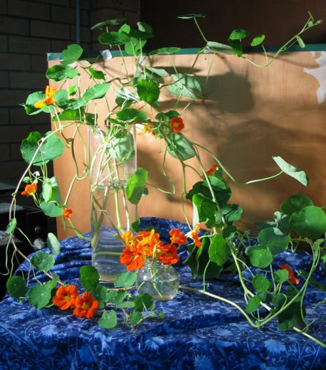 Photo of nasturtiums lit by a spotlight